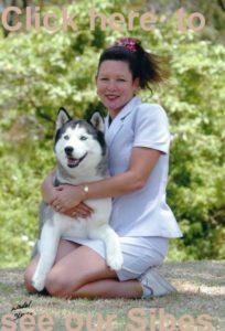 Our Siberian Huskies