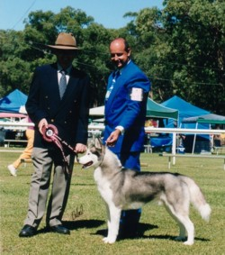 Chief at 2yrs - 2nd place Champion Sweepstakes
