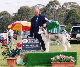 Baby Puppy in Show SHCNSW Specialty Oct.2001