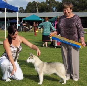 Gemma winning Baby Puppy in Group first time out