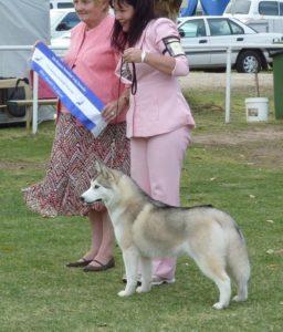 Gemma winning Best Puppy in Show at 8 months