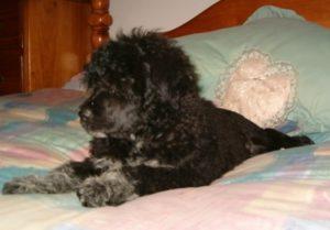 Raquel at 10 weeks